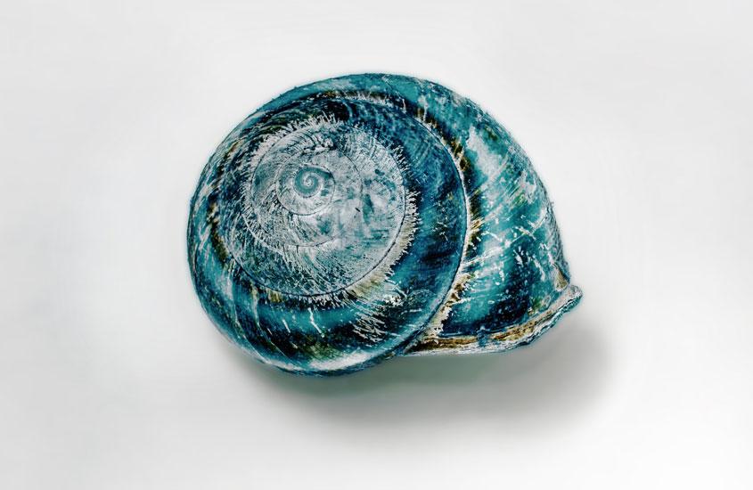 blue shell on white background