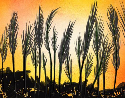tall grass growing among ruins