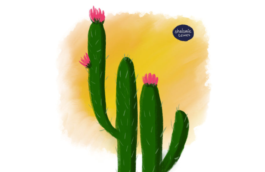 flowering cactus against an orange sky with writing